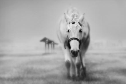 horse-wallpaper-horses-15704764-1600-1200