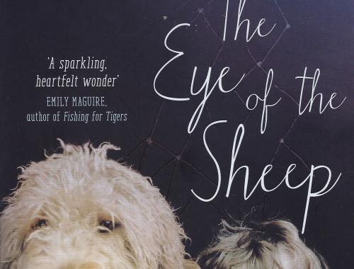 eye-of-the-sheep