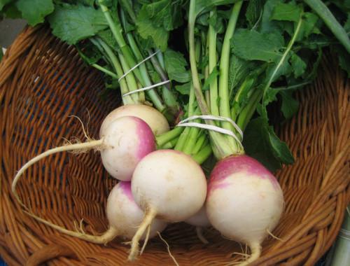 Medium-turnips